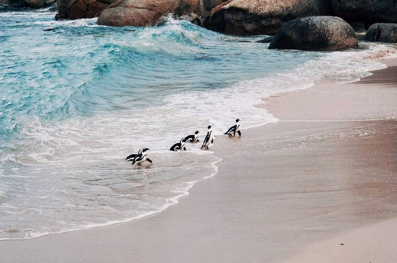 Travel Photography By Anastasia Vervueren South Africa Capetown Beach Penguins
