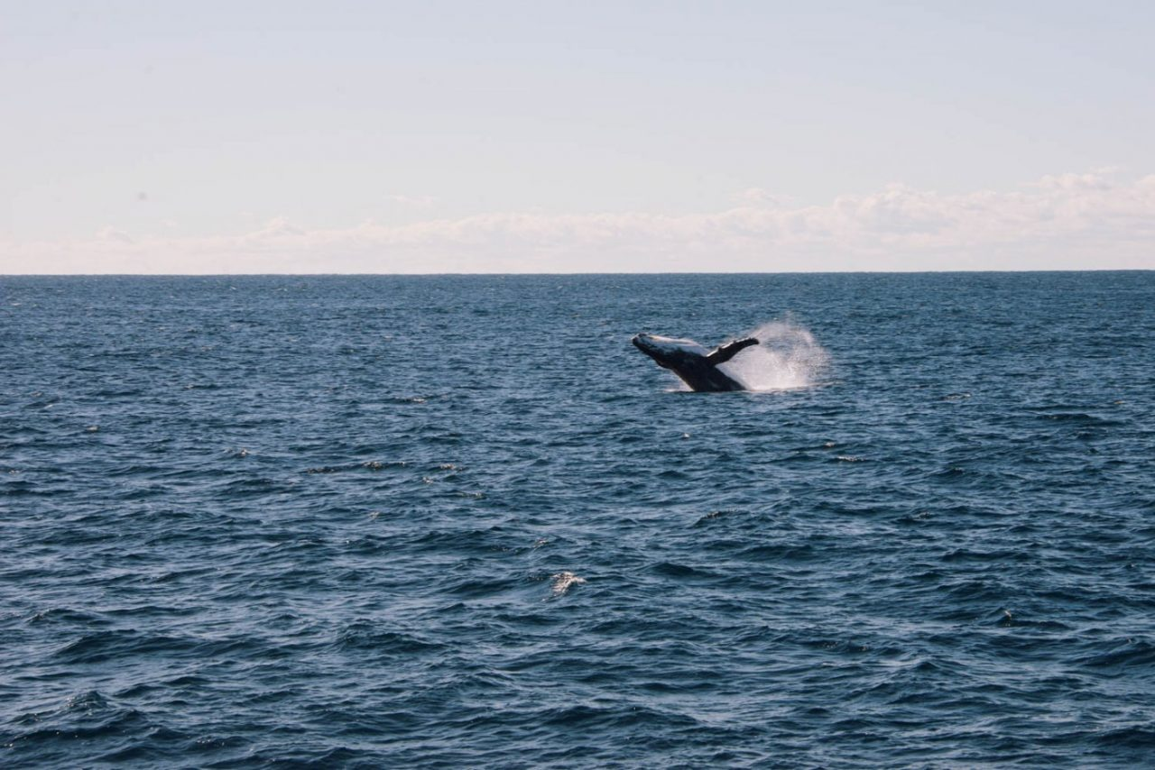 Travel Photography By Anastasia Vervueren Australia Whale Whale