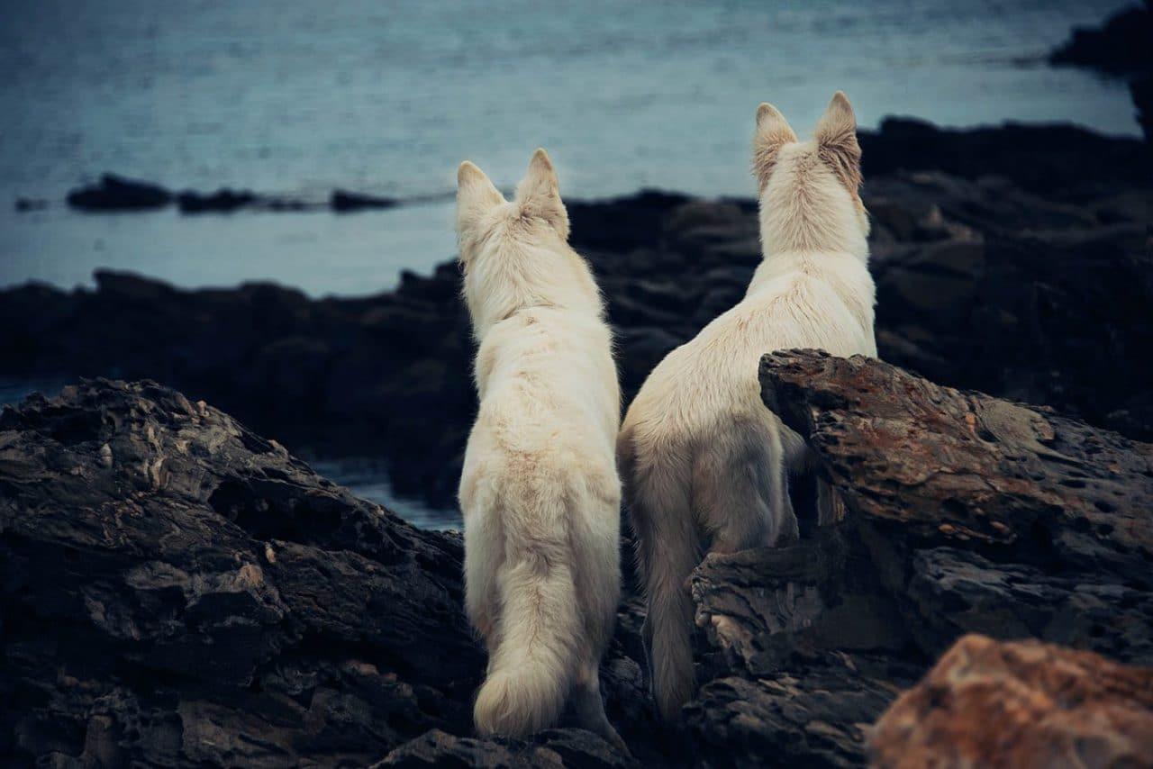 Travel Photography By Anastasia Vervueren Italy Sardinia Coast Dogs