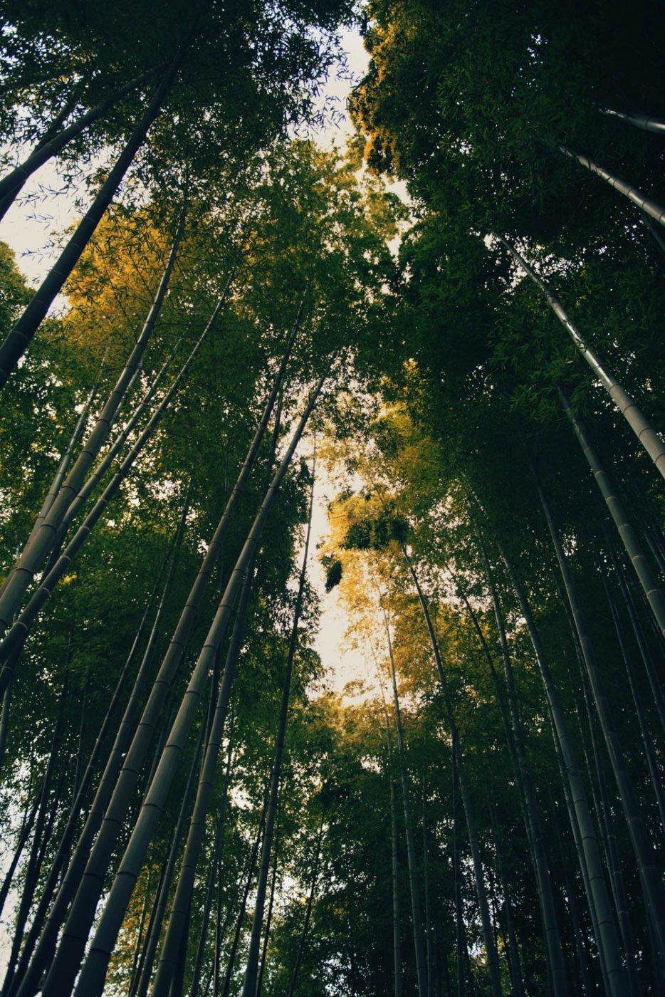 Travel Photography By Anastasia Vervueren Japan Kyoto Bamboo