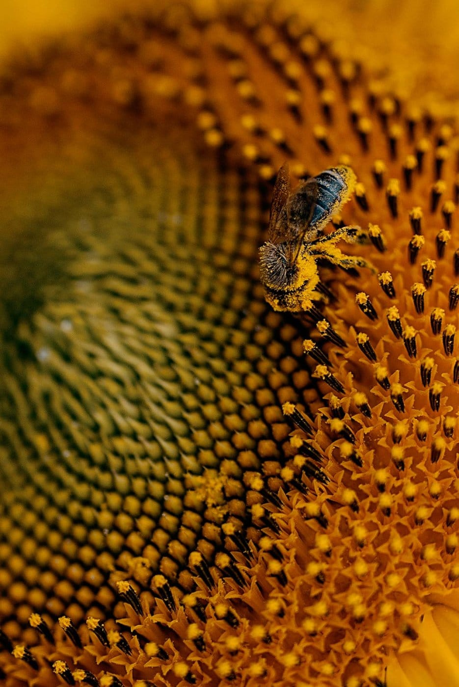 Travel Photography By Anastasia Vervueren France Gers Sunflower Bee